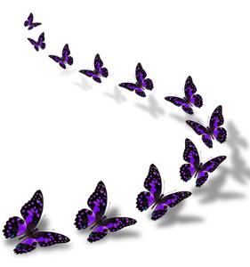 butterfly bracket two
